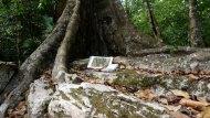 arbre-carnet
