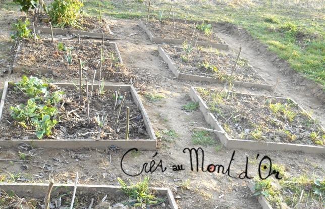 DSCN0539 carrés jardin