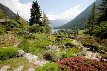 Photo officielle_Flore-Alpe et le lac de Champex_Héloïse MaretS