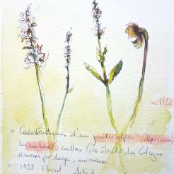 croquis aquarelle, carnet de voyage Alpes suisses