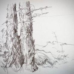 croquis aquarelle, carnet de voyage Jardin botanique alpin FLore Alpe