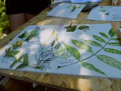 DSCF0866 carnet herbier